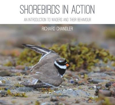 Picture of Shorebirds in Action: An Introduction to Waders and Their Behaviour