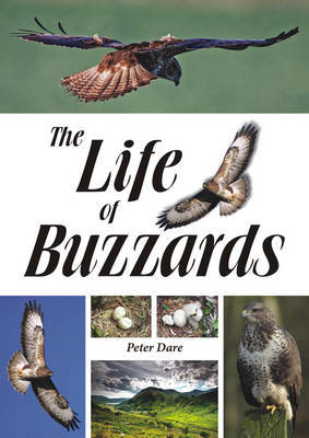 Picture of The Life of Buzzards
