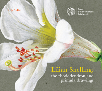 Picture of LILIAN SNELLING: THE RHODODENDRON AND PRIMULA DRAWINGS