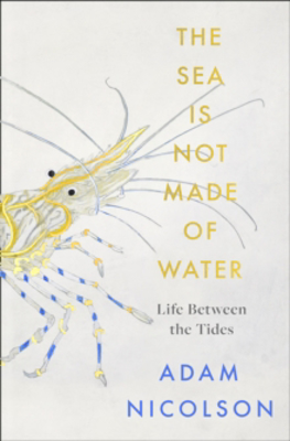 Picture of the sea is not made of water: Life Between the Tides